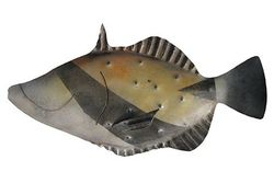 Hawaiian Trigger Fish Metal Art