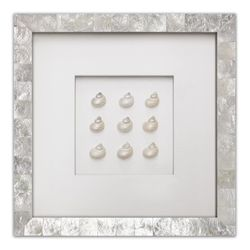 Pearl Turbo Shells Beach Wall Art
