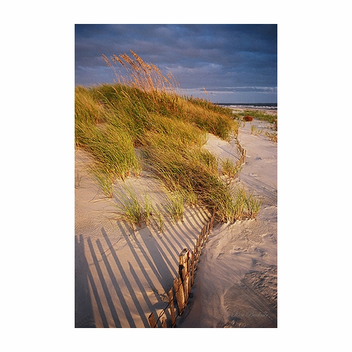 Sand fence and Dune Giclee