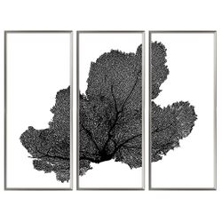 Sea Fan Triptych Coastal Artwork