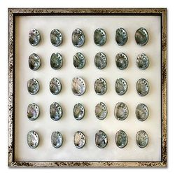 Teal Abalone Shells Beach Wall Art