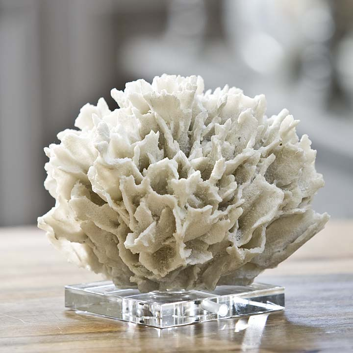 White Ribbon Coral On Crystal Base For Sale Cottage