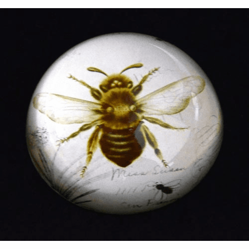 Bee Glass Dome Paperweight
