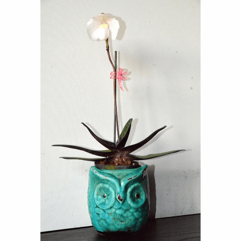 Ceramic Owl Pot