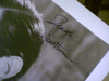 """Hamilton, George  & Susan Kohner 1960 Photo """"All The Fine Young Cannibals"""" Signed Autograph"""