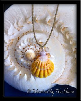 """Country Style"" Hawaiian Sunrise Shell & Puka Shell Cord Necklace"