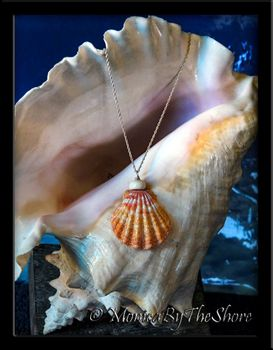 "Jumbo Hawaiian Sunrise Shell and Puka Shell ""Town & Country"" Silver Necklace"