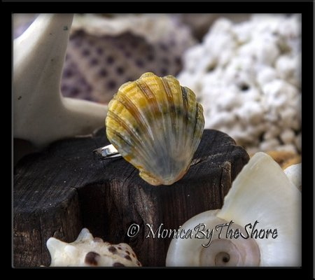 Moonrise Sunrise Shell Sterling Silver Ring
