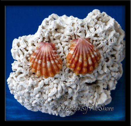 Orange Pink White Sunrise Shell Post Earrings