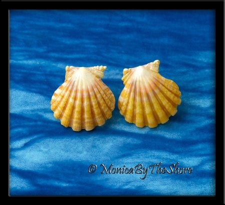 Creamy Yellow Pink Hawaiian Sunrise Shell Post Earrings