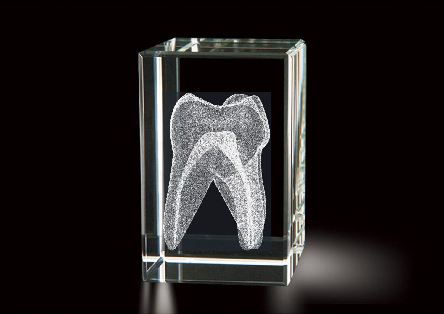 Dentistry (Tooth)