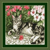 Black Striped Tabby