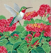 Hummingbird Splendor