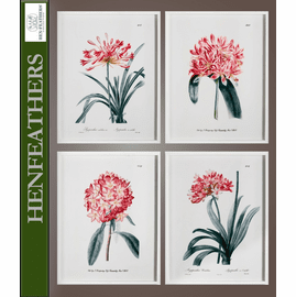 Agapanthus Study - Set of 4 Framed Prints