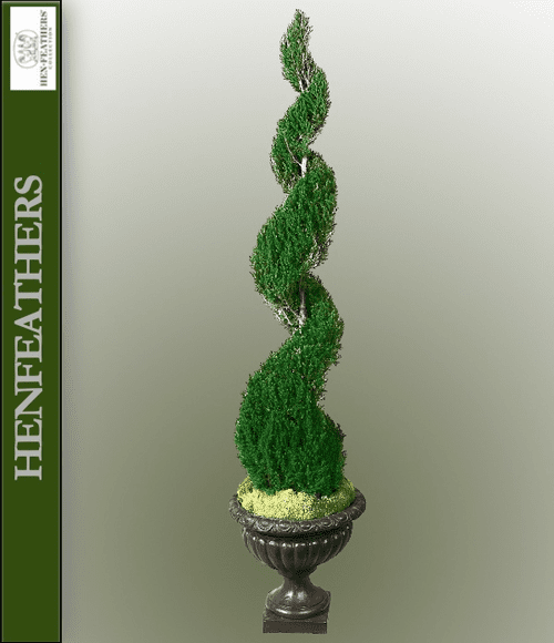 Classic Spiral Topiary Preserved