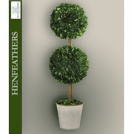 English Boxwood Double Ball Topiary
