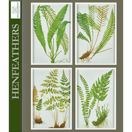 Fern Botanical Study, Set of 4 Framed Prints