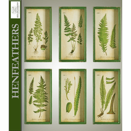 Fern Study Shadow Box Prints, Set Of 6