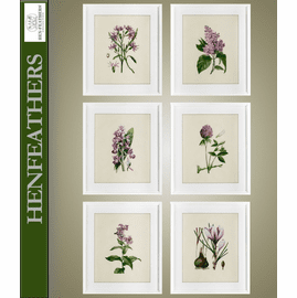 Flower Study Prints, Set Of 6