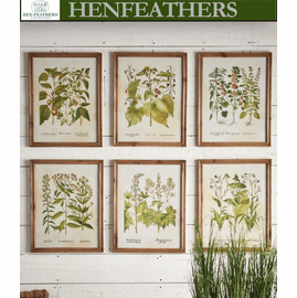 Framed Wildflower Botanical Prints, Set Of 6