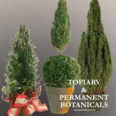 Topiaries / Permanent Botanicals