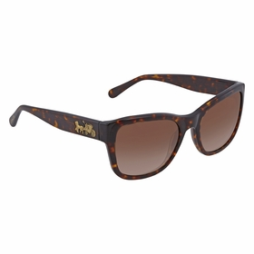 Coach HC8243 541713 55 HC8243   Sunglasses