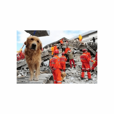 Light Search and Rescue