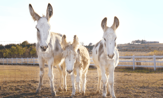DONKEY FAMILY RESCUE