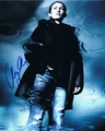 Mireille Enos Signed 8x10 Photo - Video Proof