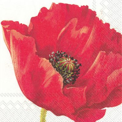 Mona Red Poppy Lunch Floral Wedding Napkins 20ct,