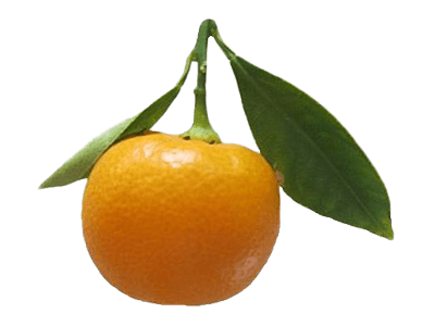 1 pound Calamondins