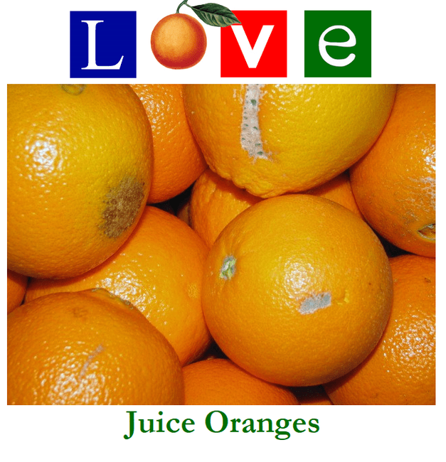 Juice Oranges 35 lb. box