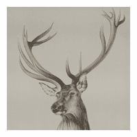 Moe's Home Furniture Roosevelt Elk Wall Decor