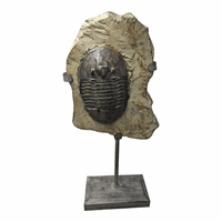 Moe's Home Furniture Trilobite Fossil On Stand