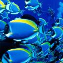 鱸魚.'s avatar