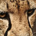 jovis's avatar