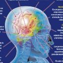 Cerebro's avatar