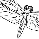 Libellule's avatar