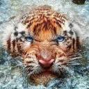 Radozim's avatar