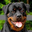 Redyre Rottweilers's avatar