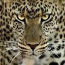 my1520's avatar