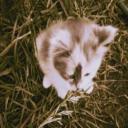 hleigh's avatar