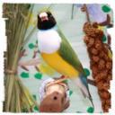 nixity's avatar