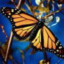 Mariposa 231's avatar