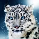 Izzadora's avatar
