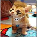 Gato PunK's avatar