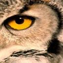 Owl Eye's avatar