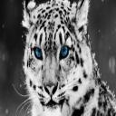 stargazer II's avatar