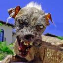Perro Loco's avatar