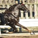 Saddle.Seat